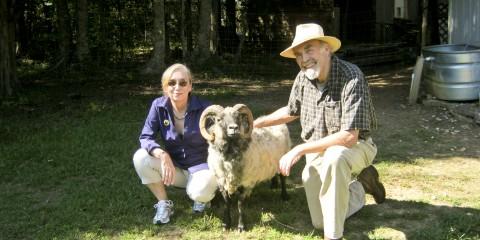 468-SHEEP 10